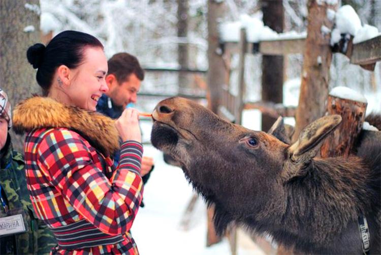 Лечение лосиным молоком в санатории имени Ивана Сусанина